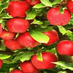 Buy apple fruit online
