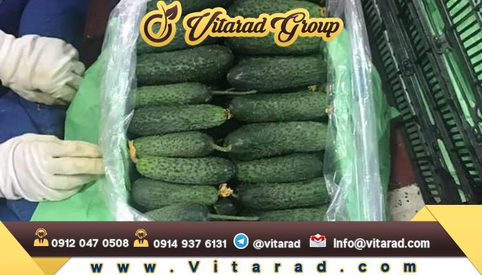 Major production of cucumber in Iran