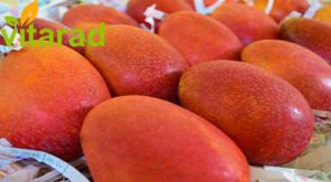 Mango fruit in Iran