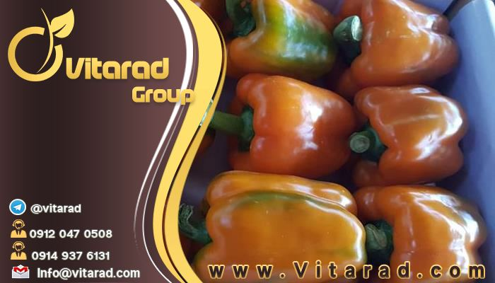 Suppliers of Iranian bell peppers