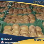 Iranian golden kiwi fruit price