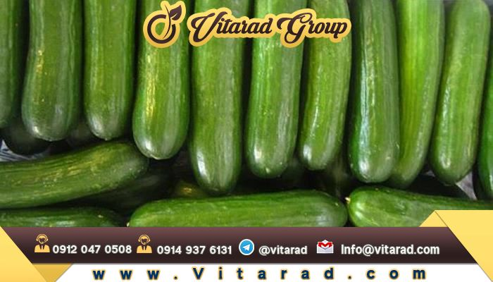 Online shopping for cucumber for export