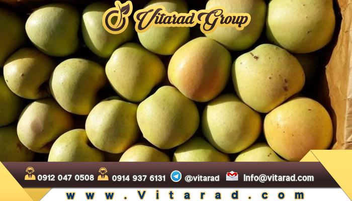 Increase of Iranian apple export