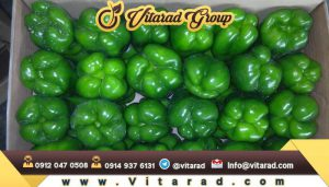 fresh bell pepper export from iran
