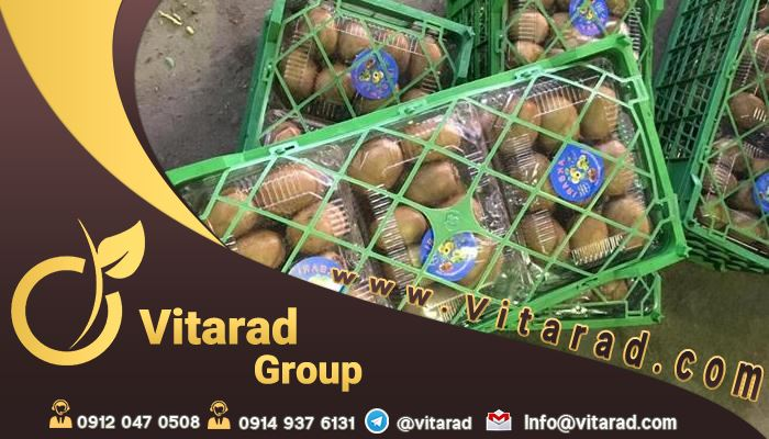 Sell kiwi Talesh for export