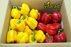 bell pepper wholesale prices