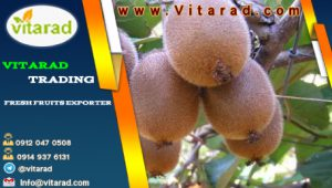 Sell kiwi fruit for export